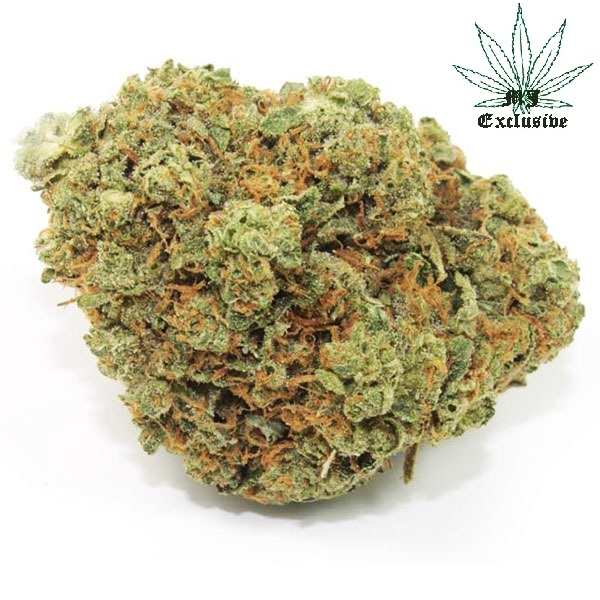 Buy SFV OG Kush, Buy SFV OG Kush strain, buy SFV OGK for sale