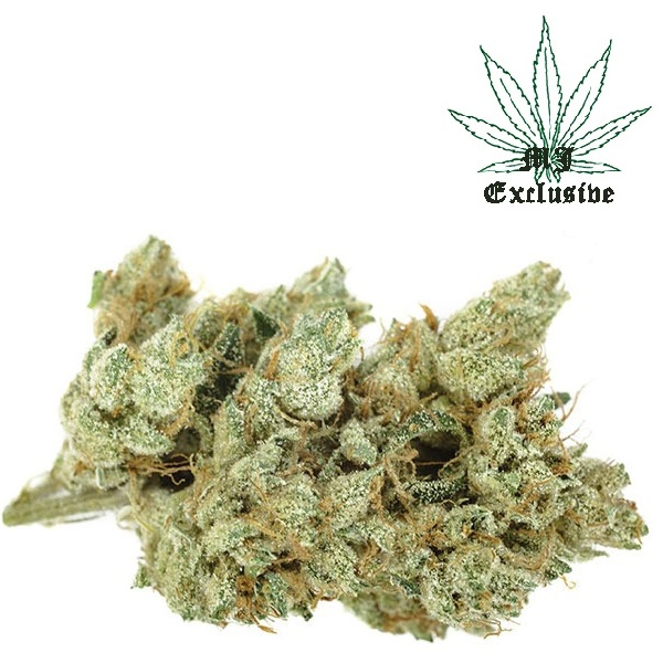 Buy Skywalker OG cannabis weed strain online for sale