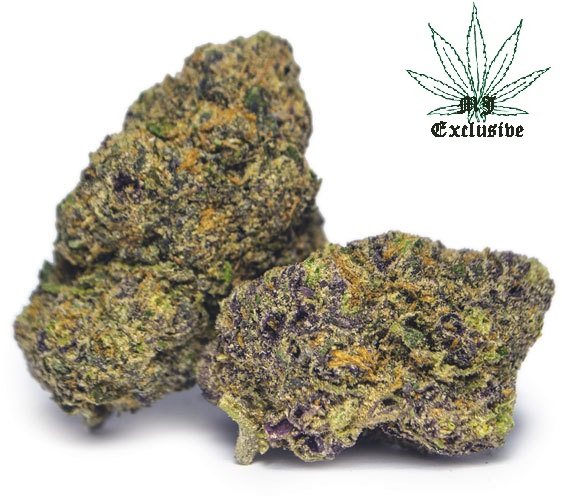 buy sunset sherbet cannabis weed strain online